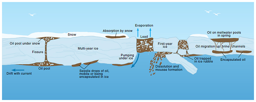 Figure 3-2. Weathering of oil spilled in ice infested environment (AMAP 1998)
