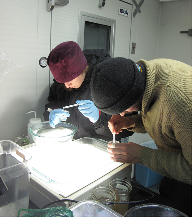 Photo 6-2: Preparing for bioassay test under Arctic conditions (William Gardiner)