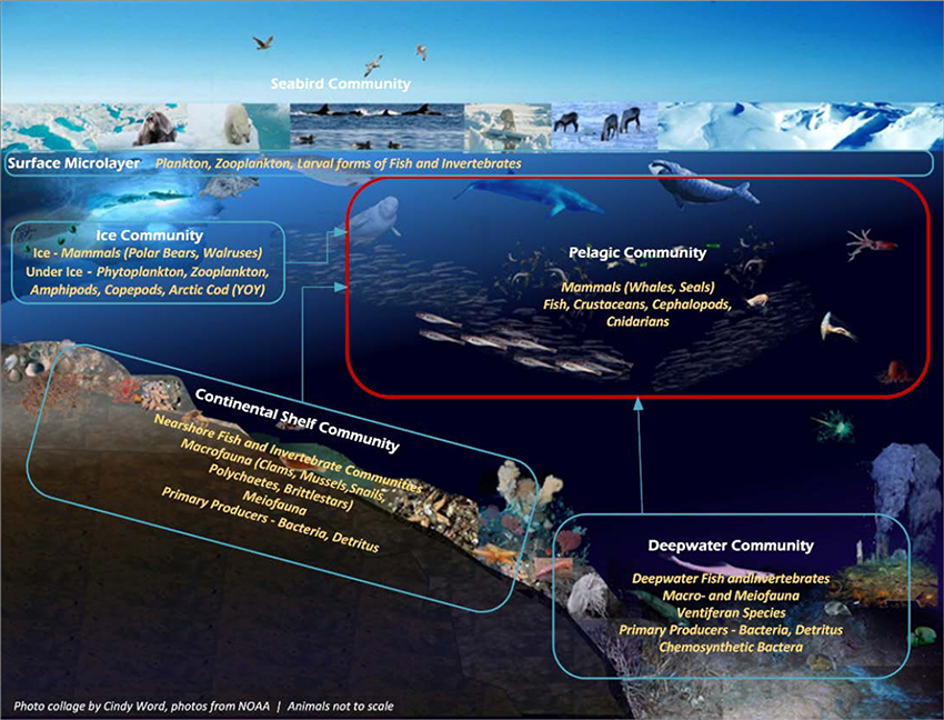 Figure E-2. Arctic ecosystem (surface microlayer, ice, nearshore continental shelf, pelagic and deep water communities) [Most literature is representative of the pelagic community, outlined in red]